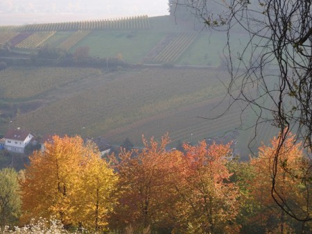 Autumn colours south of Speyer