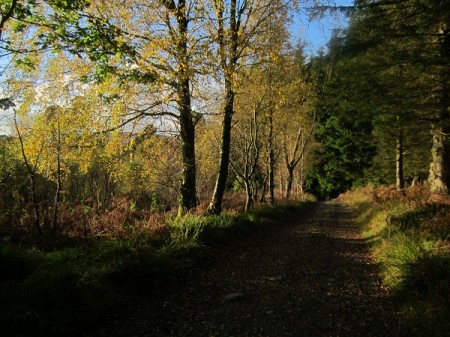 Autumn colours, late afternoon near Brodick Castle