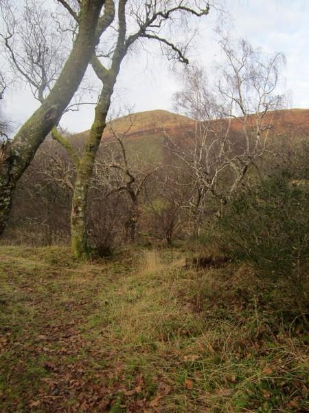 Below Beinn Dubh, Glen Luss
