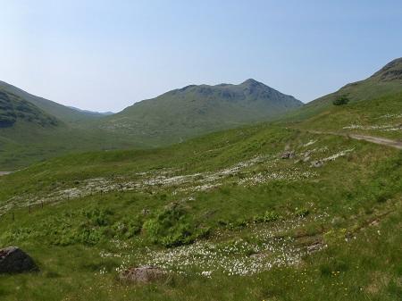 Cotton grass, Glen Lochy