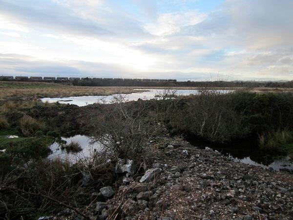 Wetlands on the River Garnock near Kilwinning